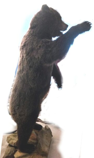 Grizzly re